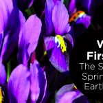We First 5: The Spirit of Spring and Earth Day are Here