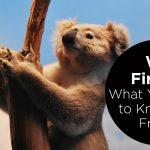 We First Five: What You Need To Know This Friday